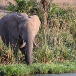 elephant-serengeti