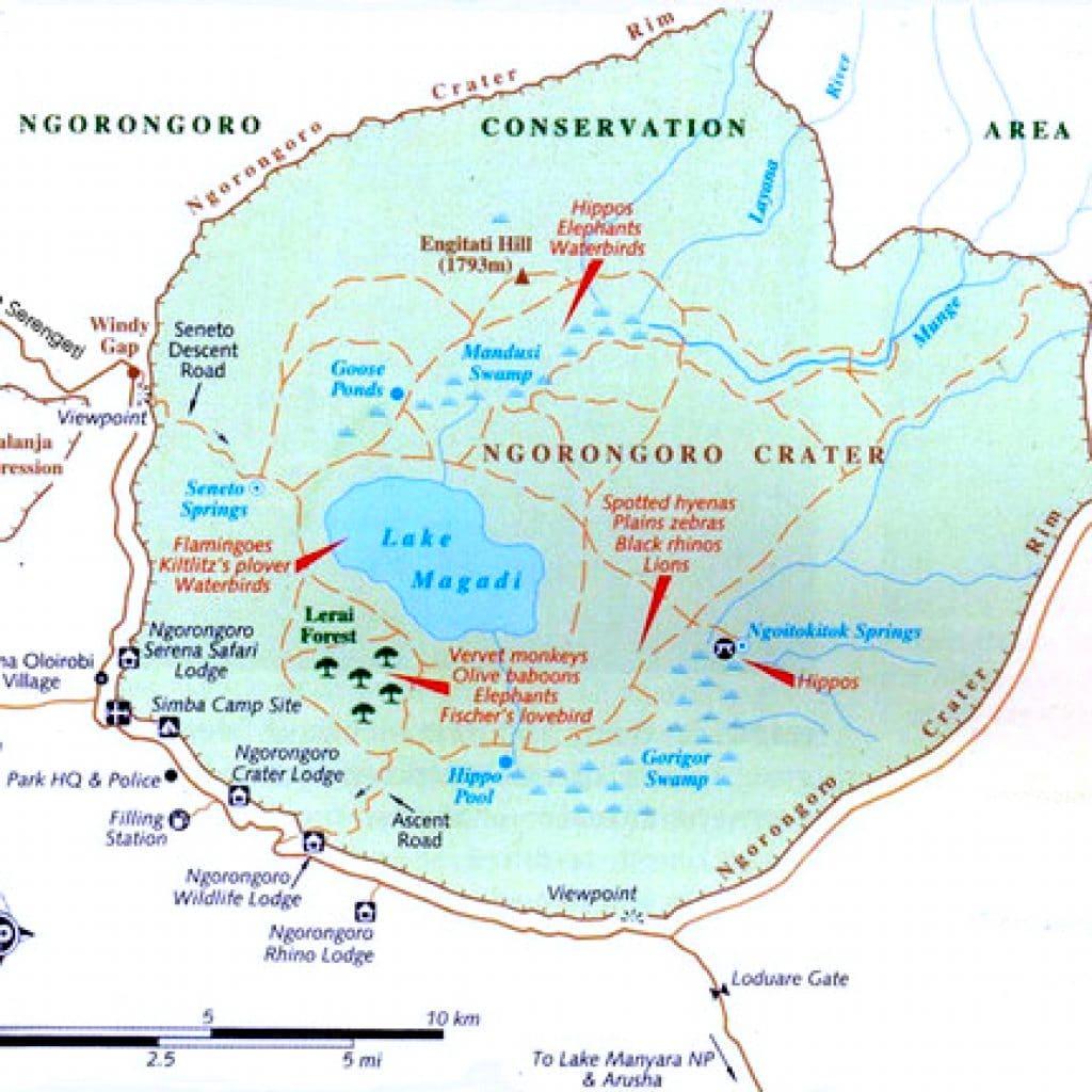 the ngorongoro crater climb kilimanjaro with the best