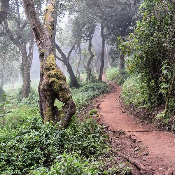 rainforest on kilimanjaro