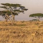 Tarangire National Park, Tanzania's Forgotten Safari